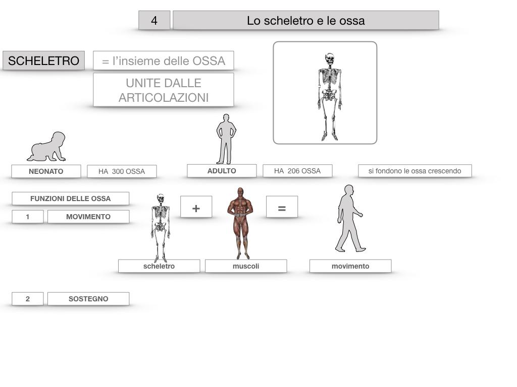 4. SCIENZE_LO SCHELETRO E LE OSSA_SIMULAZIONE.014