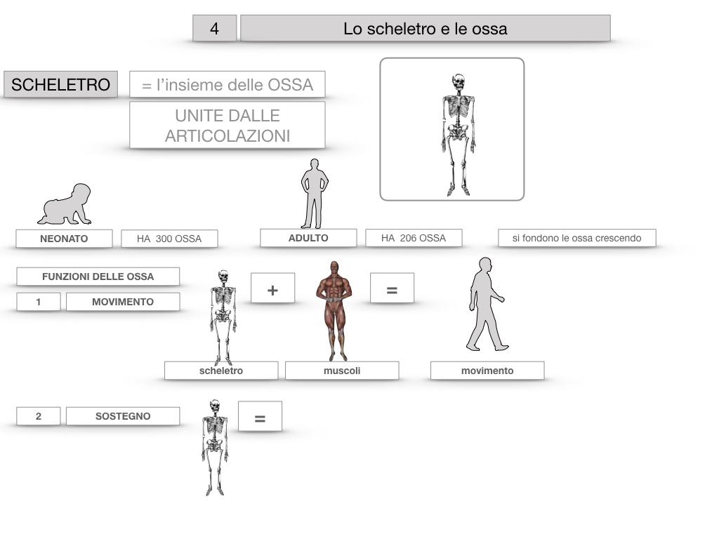 4. SCIENZE_LO SCHELETRO E LE OSSA_SIMULAZIONE.015