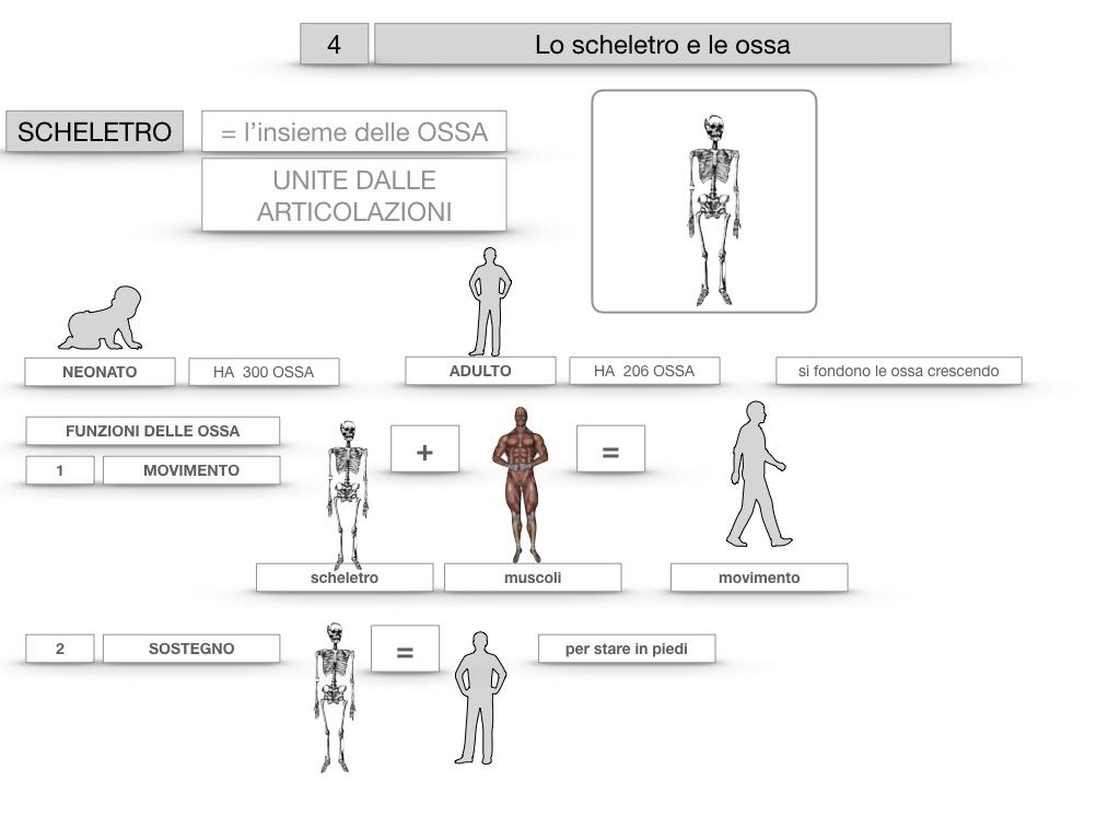 4. SCIENZE_LO SCHELETRO E LE OSSA_SIMULAZIONE.016