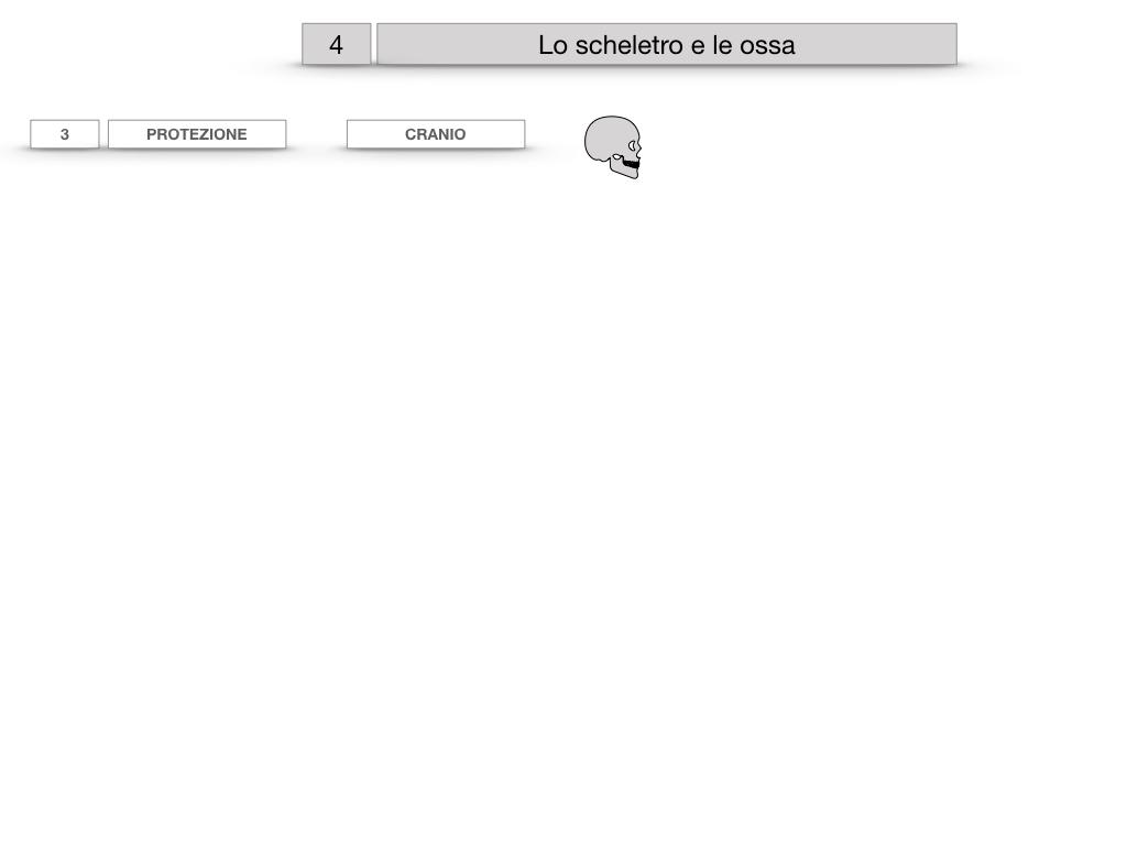 4. SCIENZE_LO SCHELETRO E LE OSSA_SIMULAZIONE.018