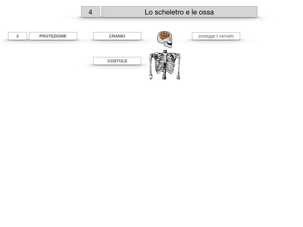 4. SCIENZE_LO SCHELETRO E LE OSSA_SIMULAZIONE.020