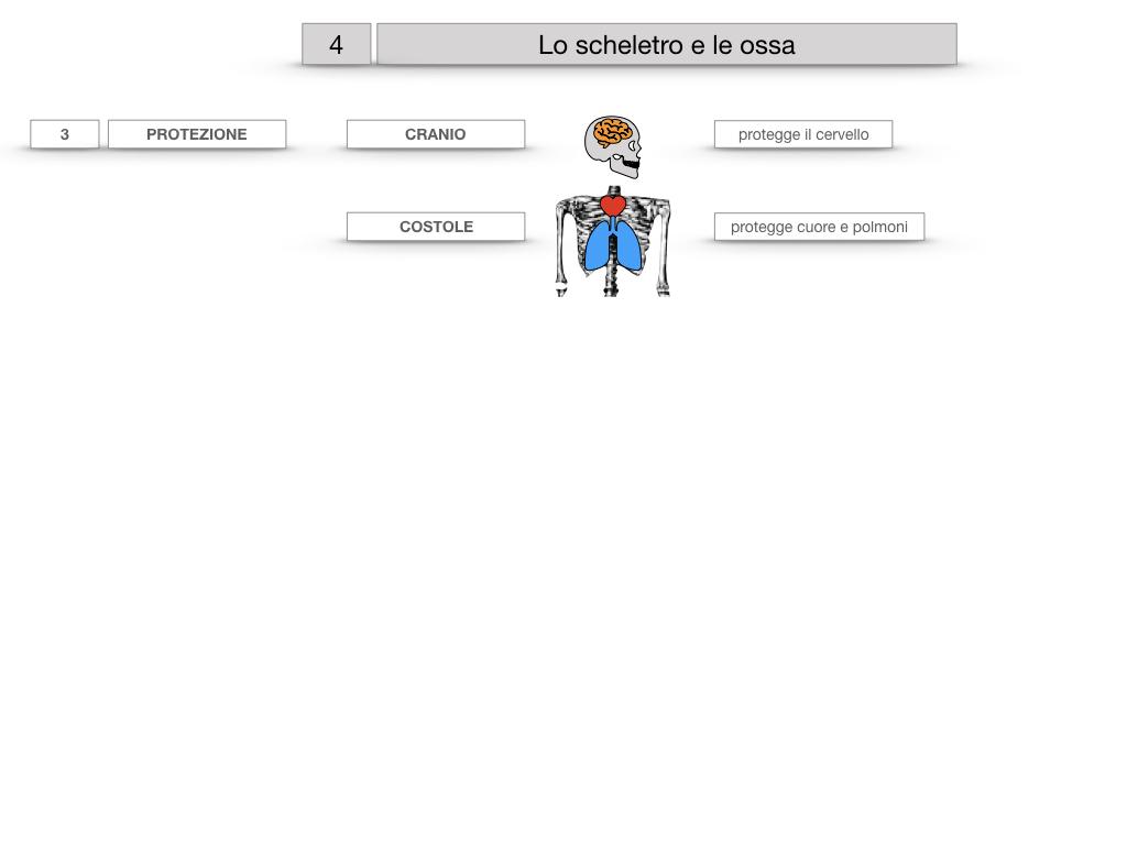 4. SCIENZE_LO SCHELETRO E LE OSSA_SIMULAZIONE.021