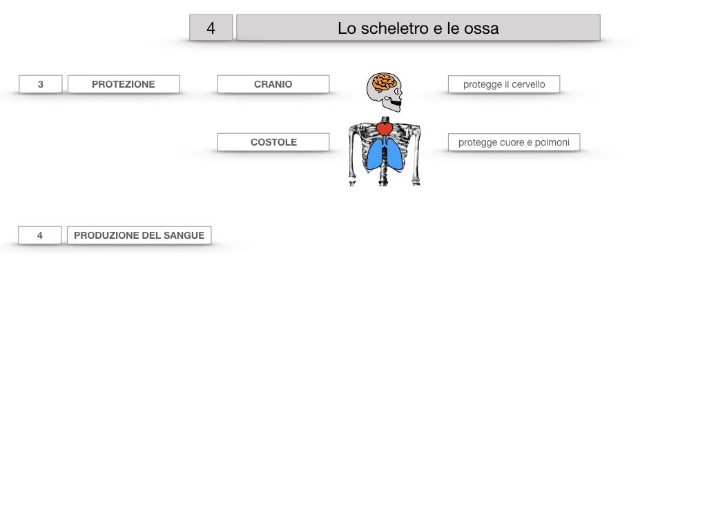 4. SCIENZE_LO SCHELETRO E LE OSSA_SIMULAZIONE.022