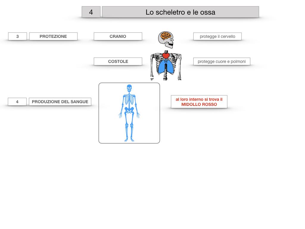 4. SCIENZE_LO SCHELETRO E LE OSSA_SIMULAZIONE.023
