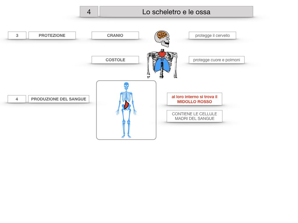 4. SCIENZE_LO SCHELETRO E LE OSSA_SIMULAZIONE.025