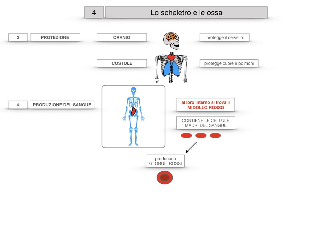 4. SCIENZE_LO SCHELETRO E LE OSSA_SIMULAZIONE.026