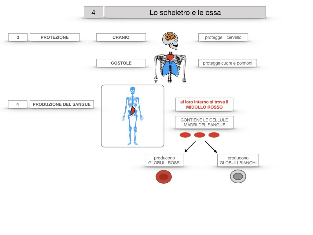 4. SCIENZE_LO SCHELETRO E LE OSSA_SIMULAZIONE.027