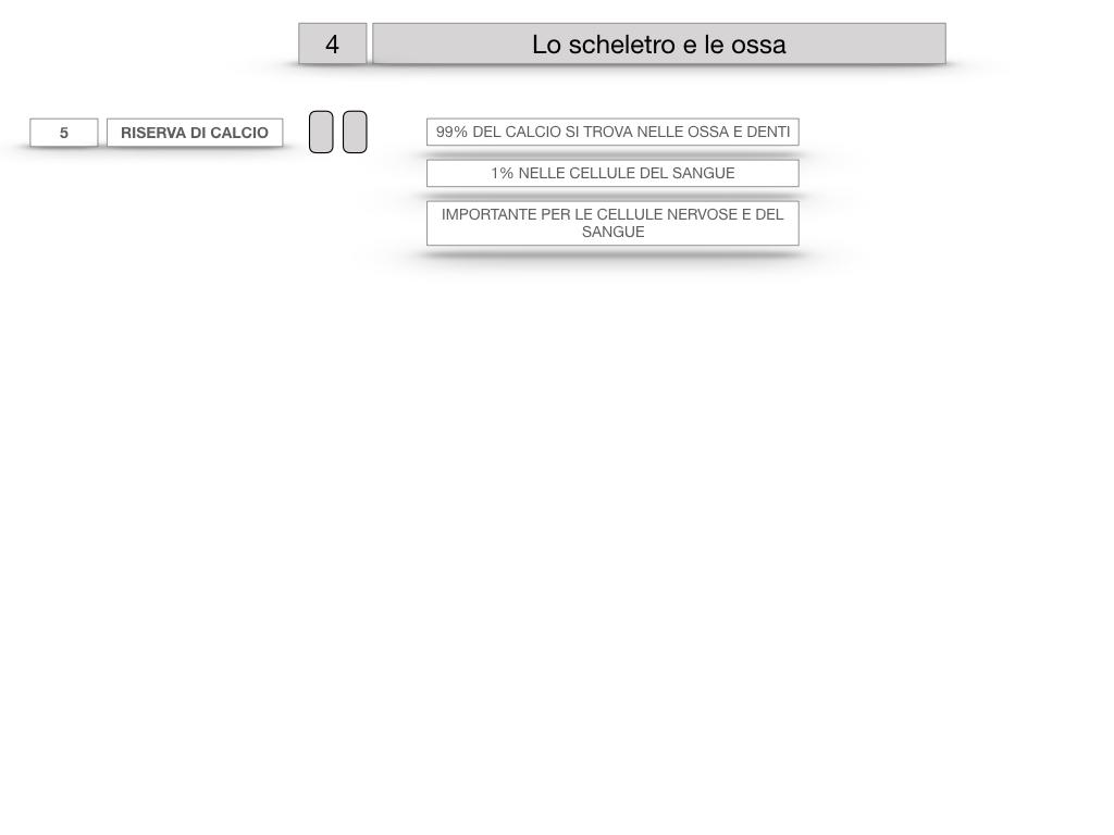 4. SCIENZE_LO SCHELETRO E LE OSSA_SIMULAZIONE.031