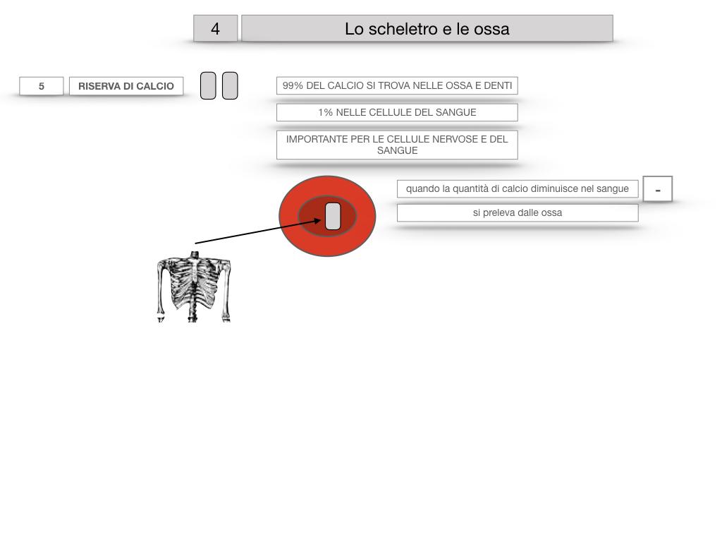 4. SCIENZE_LO SCHELETRO E LE OSSA_SIMULAZIONE.033