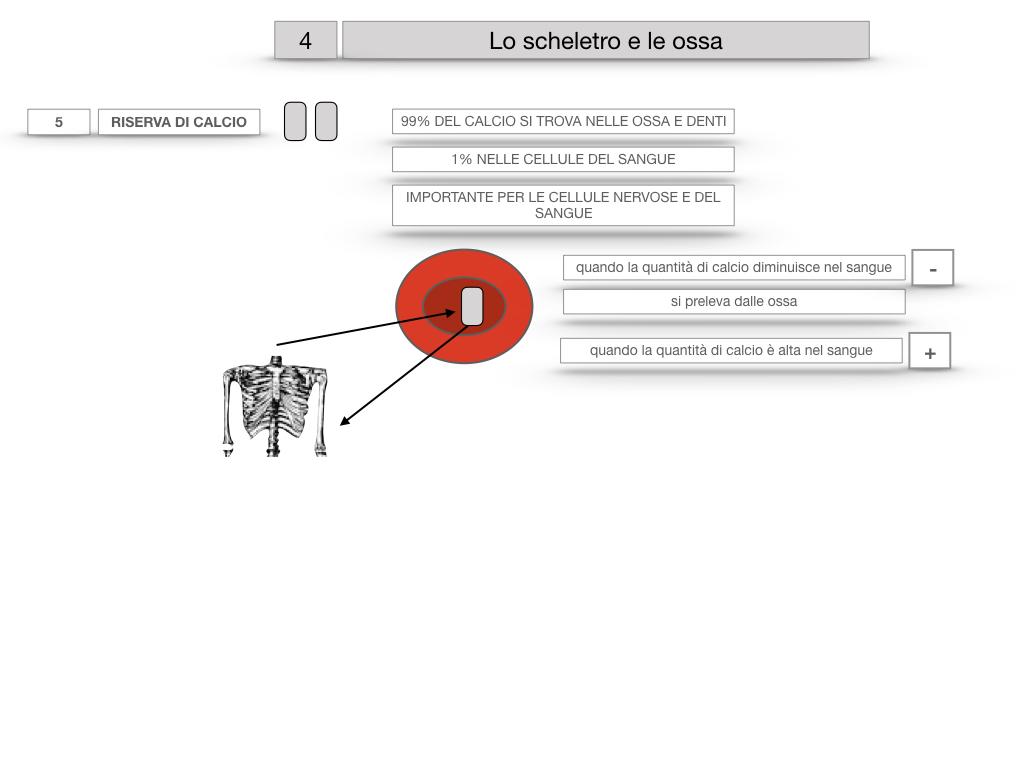 4. SCIENZE_LO SCHELETRO E LE OSSA_SIMULAZIONE.034