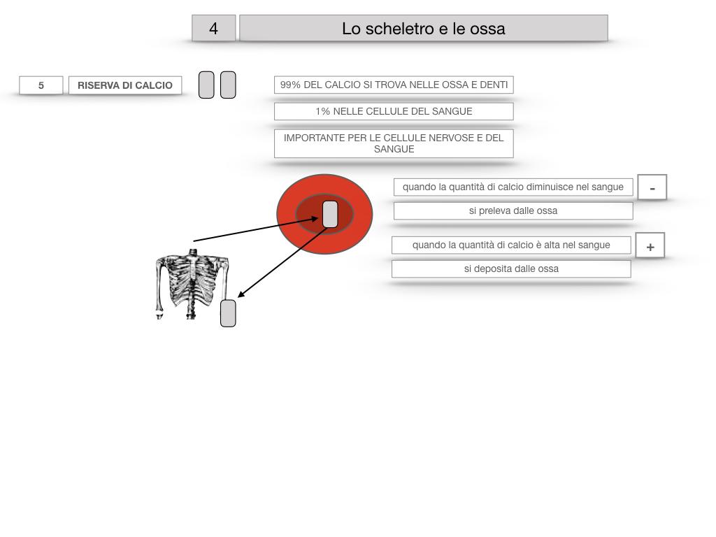4. SCIENZE_LO SCHELETRO E LE OSSA_SIMULAZIONE.035