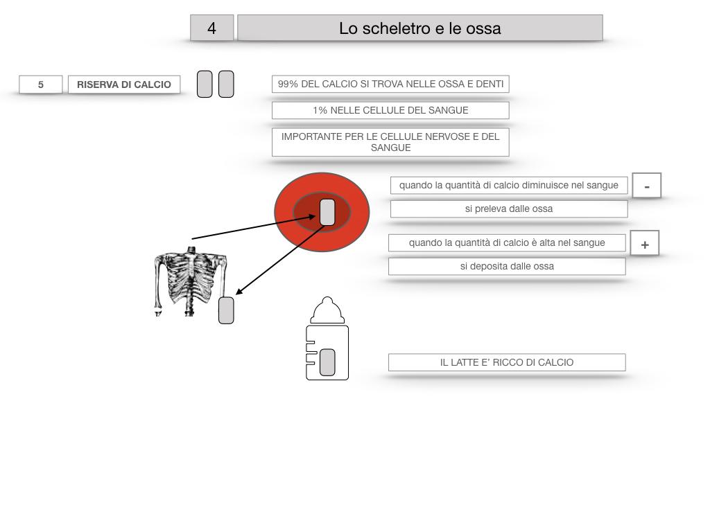 4. SCIENZE_LO SCHELETRO E LE OSSA_SIMULAZIONE.036
