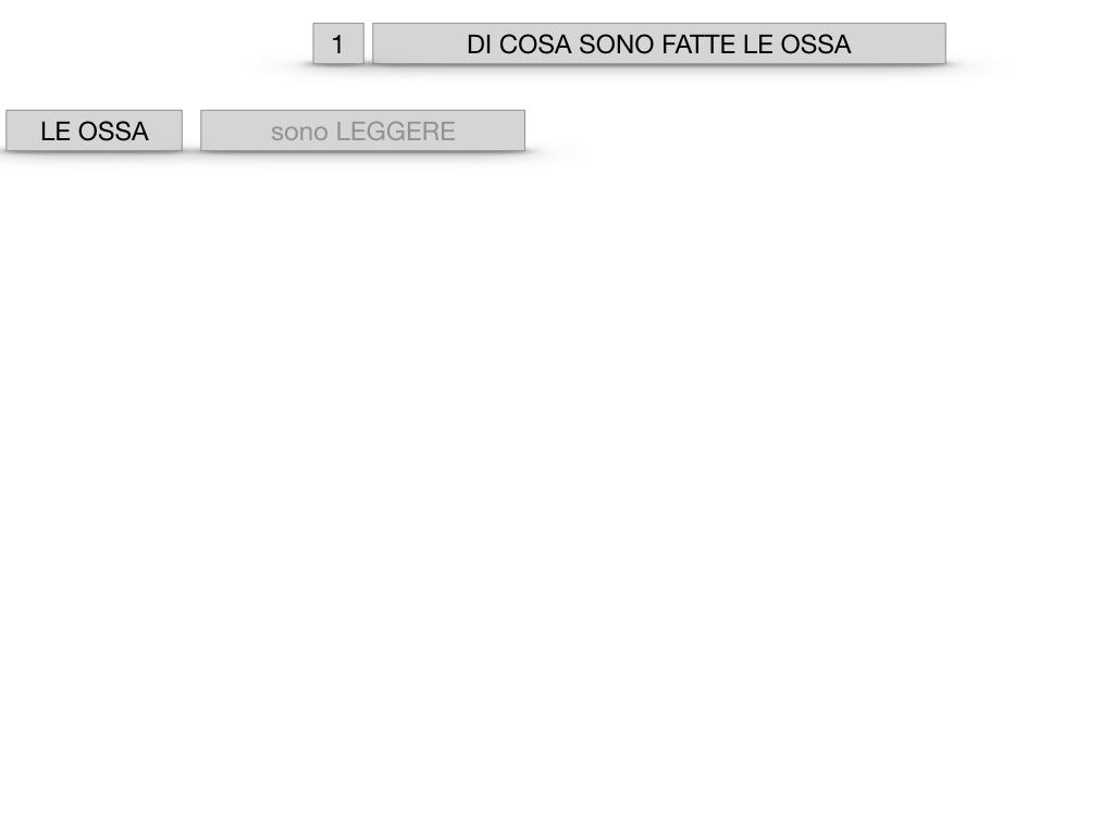 5. SCIENZE_COMPOSIZIONE E FORMA DELLE OSSA_SIMULAZIONE.002