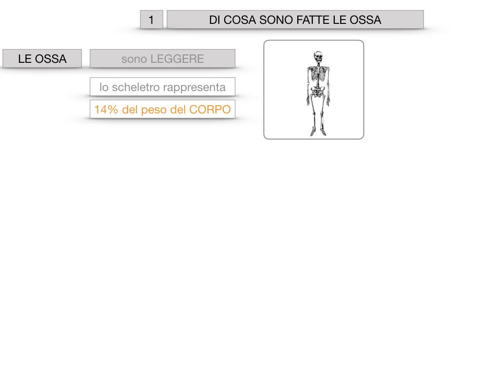 5. SCIENZE_COMPOSIZIONE E FORMA DELLE OSSA_SIMULAZIONE.004