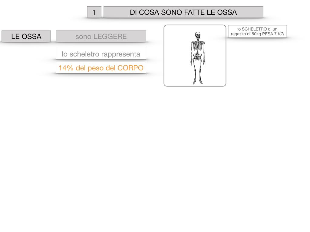 5. SCIENZE_COMPOSIZIONE E FORMA DELLE OSSA_SIMULAZIONE.005