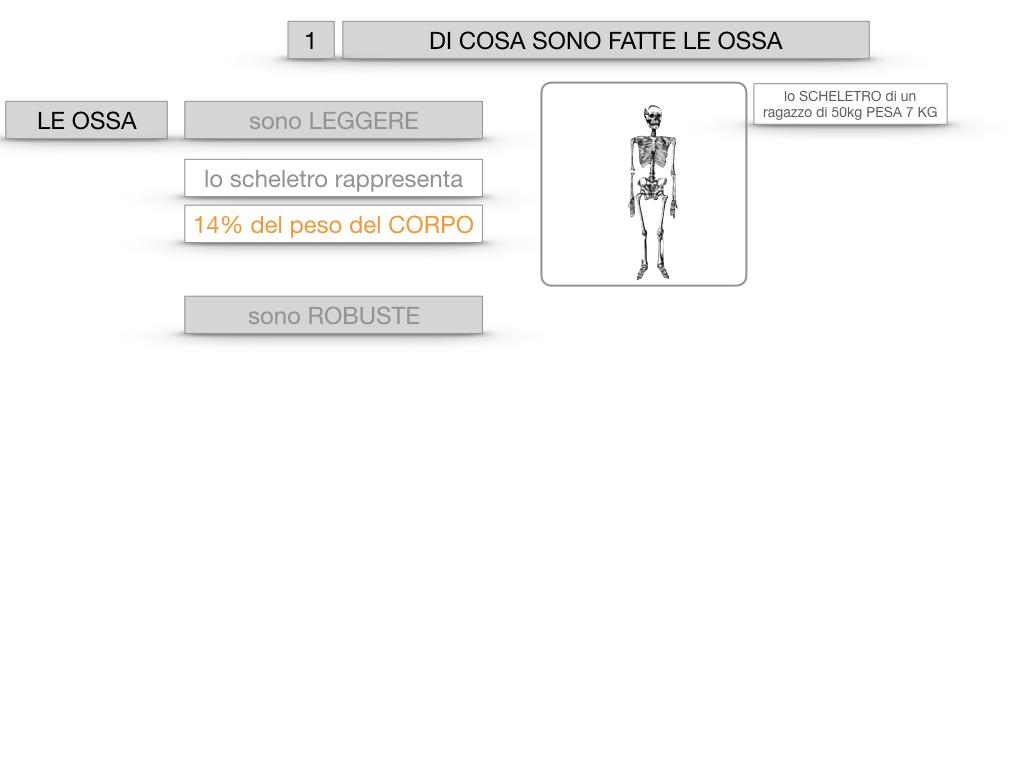 5. SCIENZE_COMPOSIZIONE E FORMA DELLE OSSA_SIMULAZIONE.006
