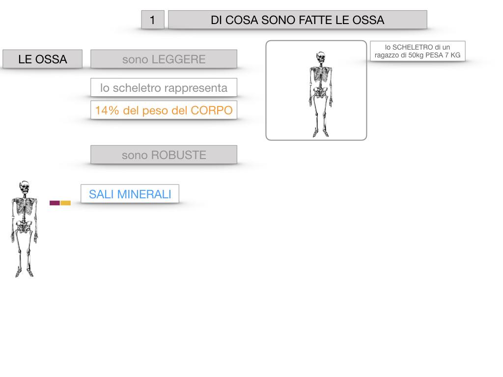 5. SCIENZE_COMPOSIZIONE E FORMA DELLE OSSA_SIMULAZIONE.007