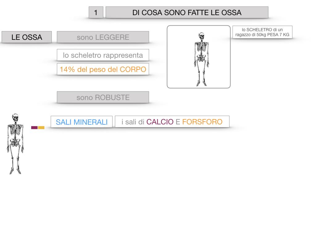 5. SCIENZE_COMPOSIZIONE E FORMA DELLE OSSA_SIMULAZIONE.008