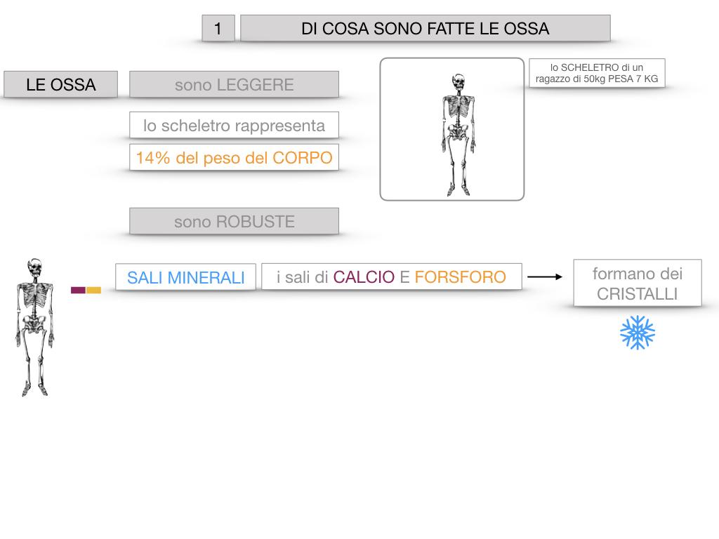 5. SCIENZE_COMPOSIZIONE E FORMA DELLE OSSA_SIMULAZIONE.010