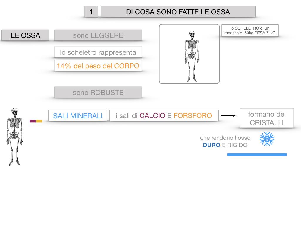 5. SCIENZE_COMPOSIZIONE E FORMA DELLE OSSA_SIMULAZIONE.011