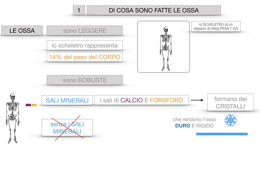 5. SCIENZE_COMPOSIZIONE E FORMA DELLE OSSA_SIMULAZIONE.012