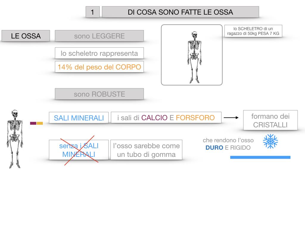 5. SCIENZE_COMPOSIZIONE E FORMA DELLE OSSA_SIMULAZIONE.013