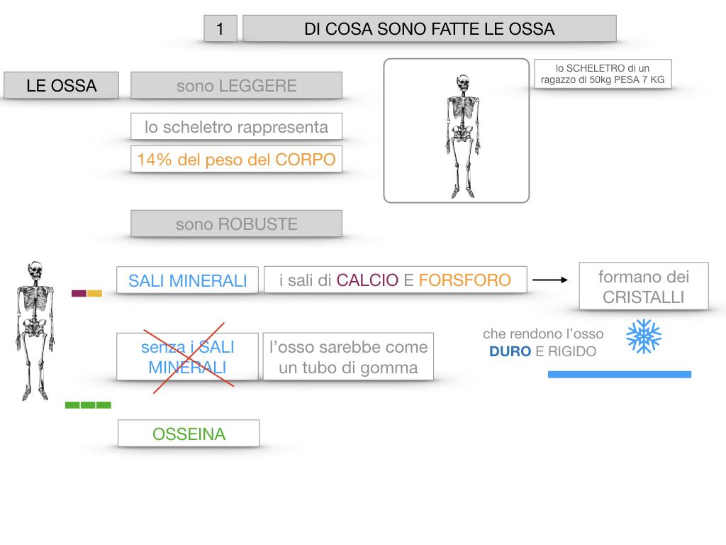 5. SCIENZE_COMPOSIZIONE E FORMA DELLE OSSA_SIMULAZIONE.014