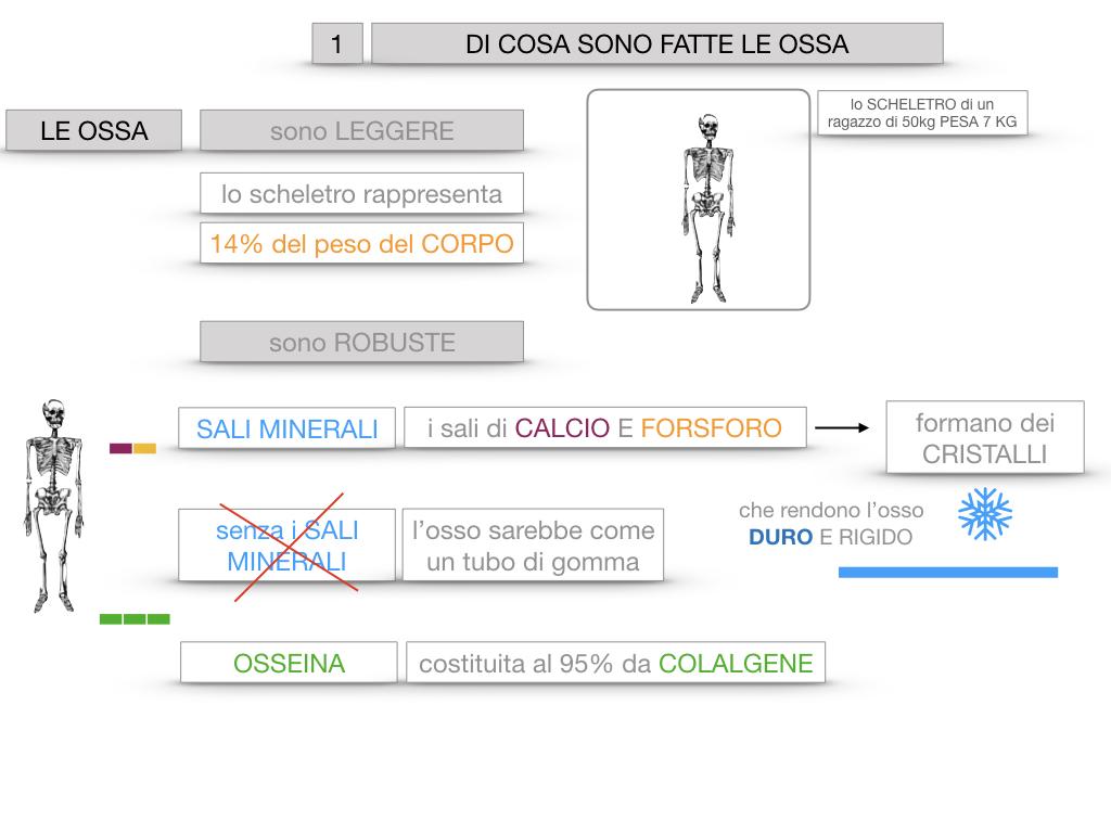 5. SCIENZE_COMPOSIZIONE E FORMA DELLE OSSA_SIMULAZIONE.015