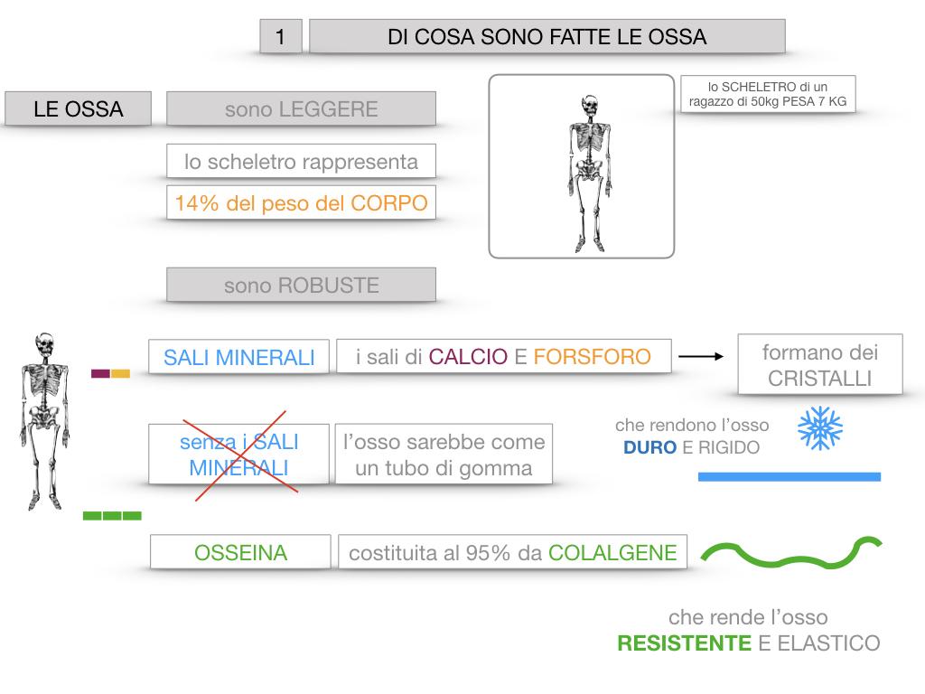 5. SCIENZE_COMPOSIZIONE E FORMA DELLE OSSA_SIMULAZIONE.016