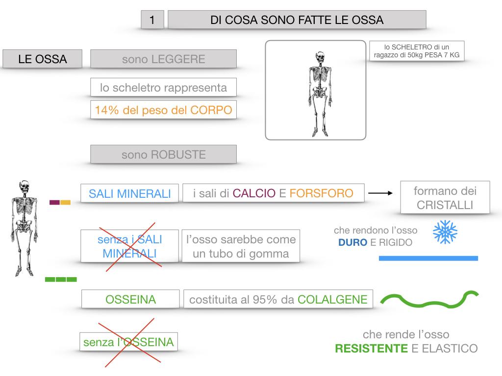 5. SCIENZE_COMPOSIZIONE E FORMA DELLE OSSA_SIMULAZIONE.017