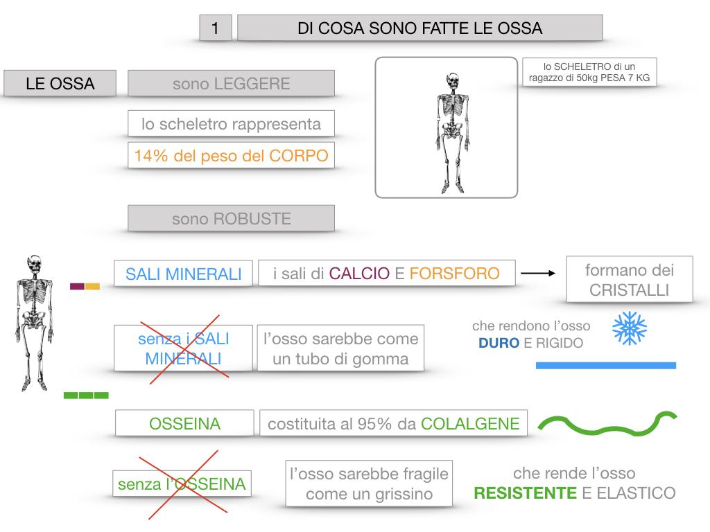 5. SCIENZE_COMPOSIZIONE E FORMA DELLE OSSA_SIMULAZIONE.018