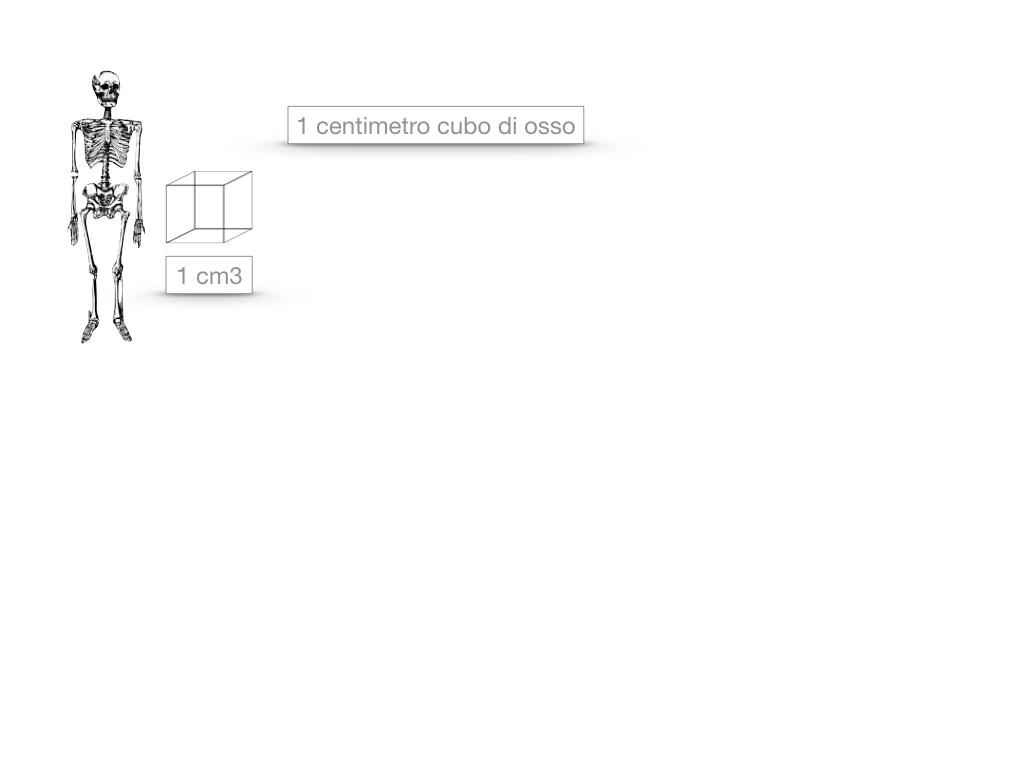 5. SCIENZE_COMPOSIZIONE E FORMA DELLE OSSA_SIMULAZIONE.019