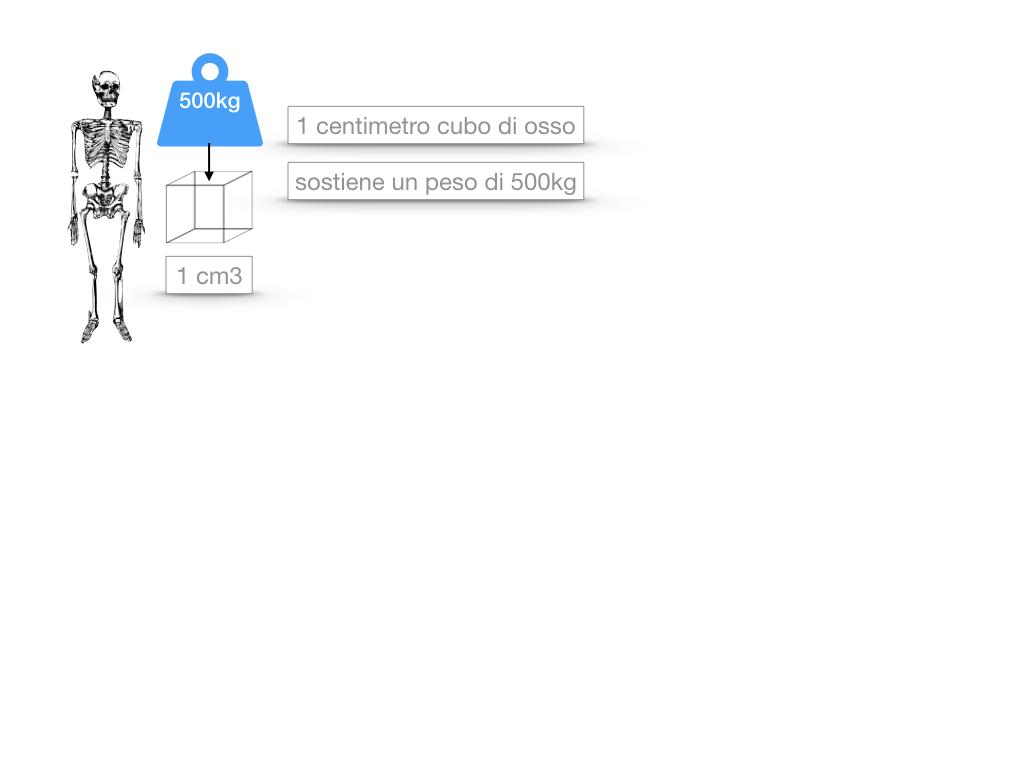 5. SCIENZE_COMPOSIZIONE E FORMA DELLE OSSA_SIMULAZIONE.020