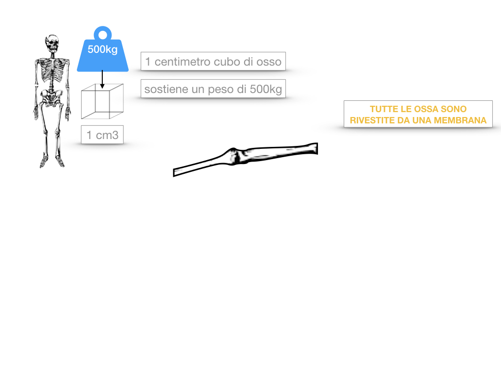 5. SCIENZE_COMPOSIZIONE E FORMA DELLE OSSA_SIMULAZIONE.021