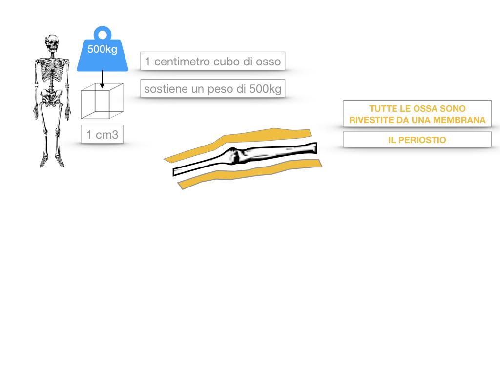 5. SCIENZE_COMPOSIZIONE E FORMA DELLE OSSA_SIMULAZIONE.022