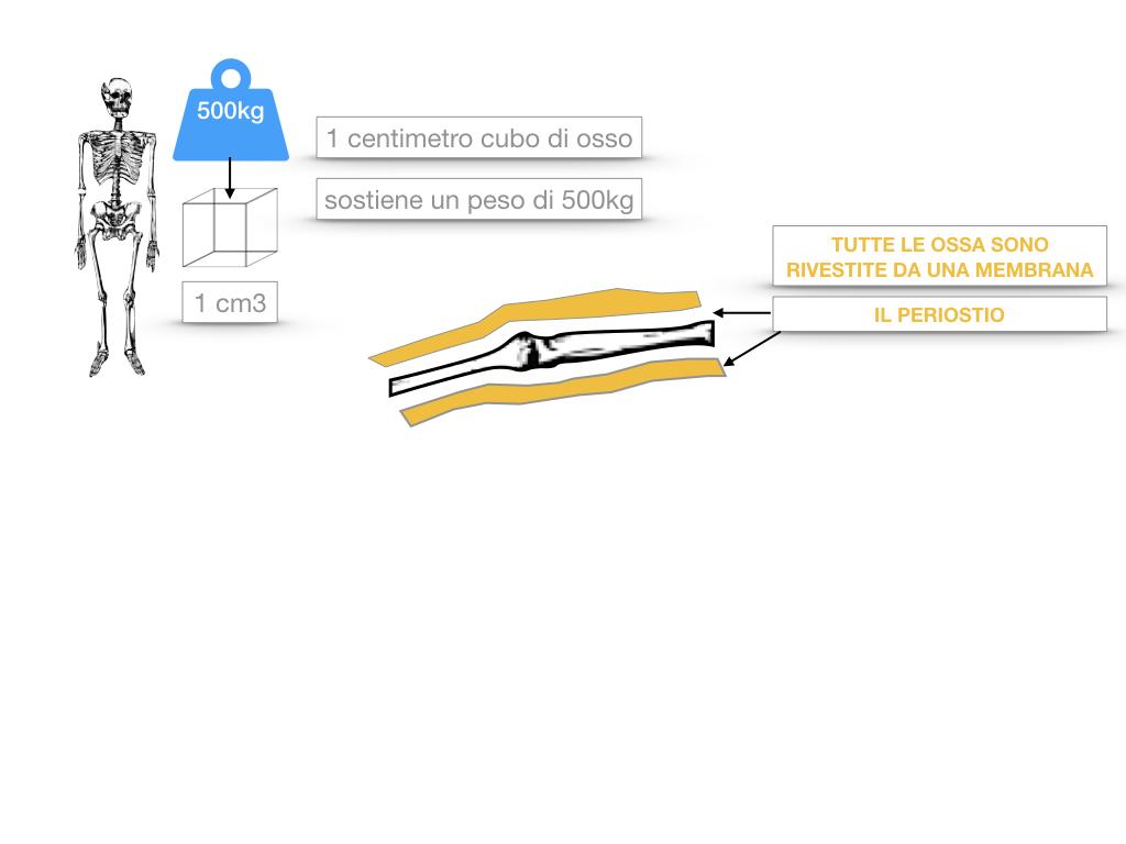 5. SCIENZE_COMPOSIZIONE E FORMA DELLE OSSA_SIMULAZIONE.023
