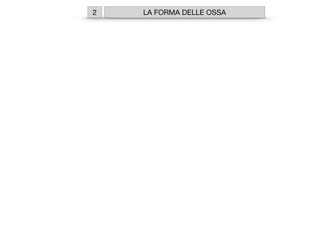 5. SCIENZE_COMPOSIZIONE E FORMA DELLE OSSA_SIMULAZIONE.036