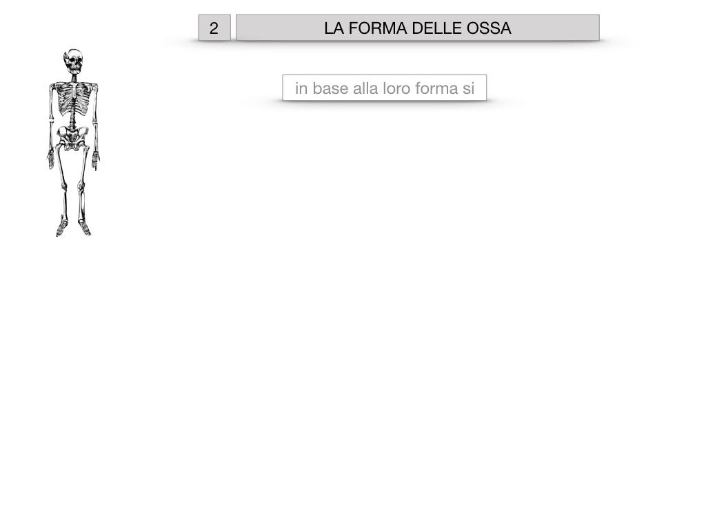 5. SCIENZE_COMPOSIZIONE E FORMA DELLE OSSA_SIMULAZIONE.037