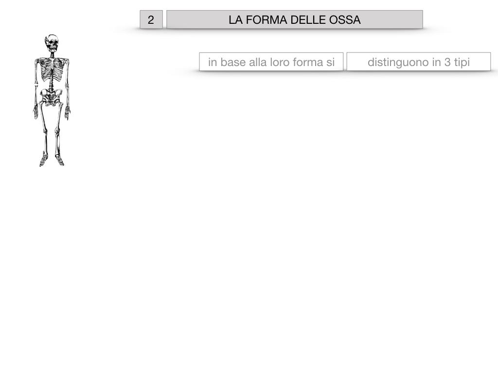5. SCIENZE_COMPOSIZIONE E FORMA DELLE OSSA_SIMULAZIONE.038