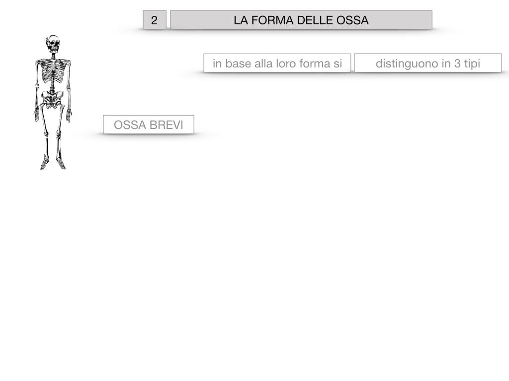 5. SCIENZE_COMPOSIZIONE E FORMA DELLE OSSA_SIMULAZIONE.039