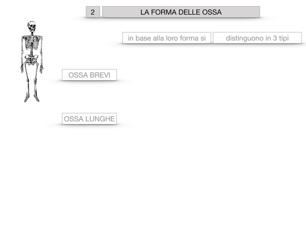 5. SCIENZE_COMPOSIZIONE E FORMA DELLE OSSA_SIMULAZIONE.040