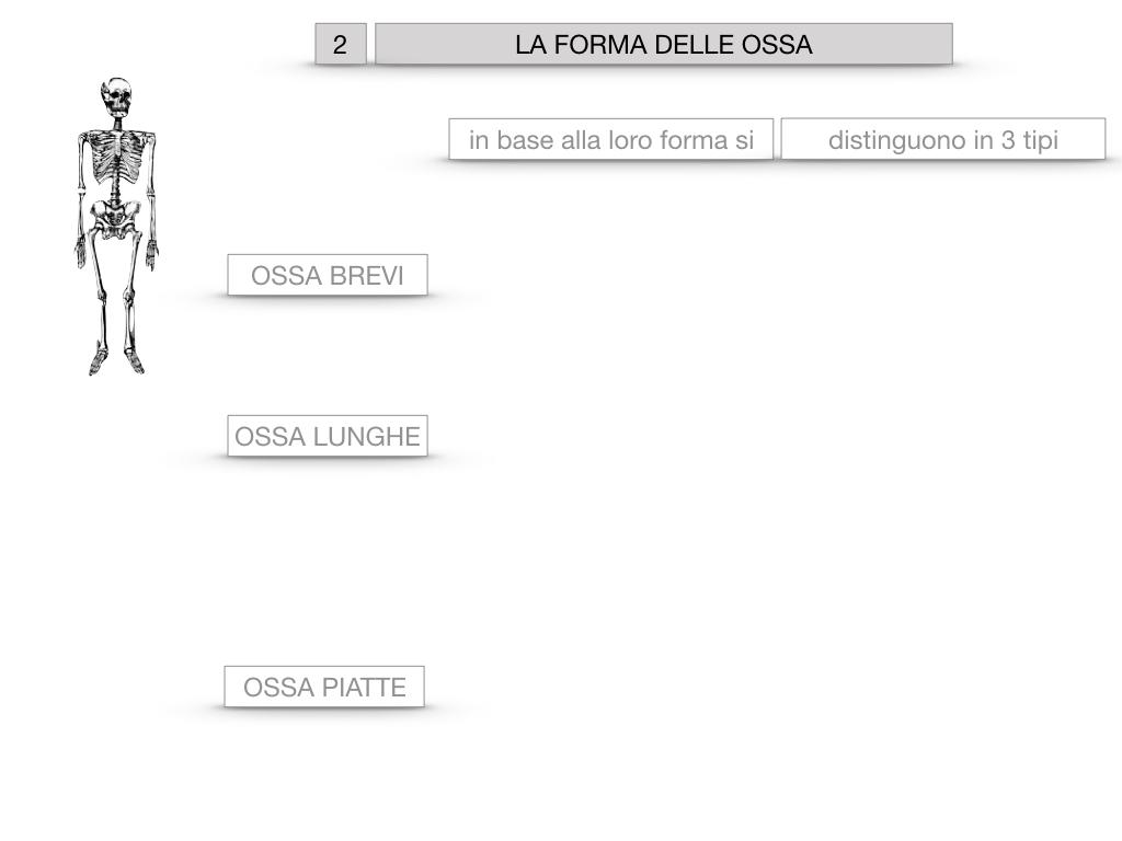 5. SCIENZE_COMPOSIZIONE E FORMA DELLE OSSA_SIMULAZIONE.041