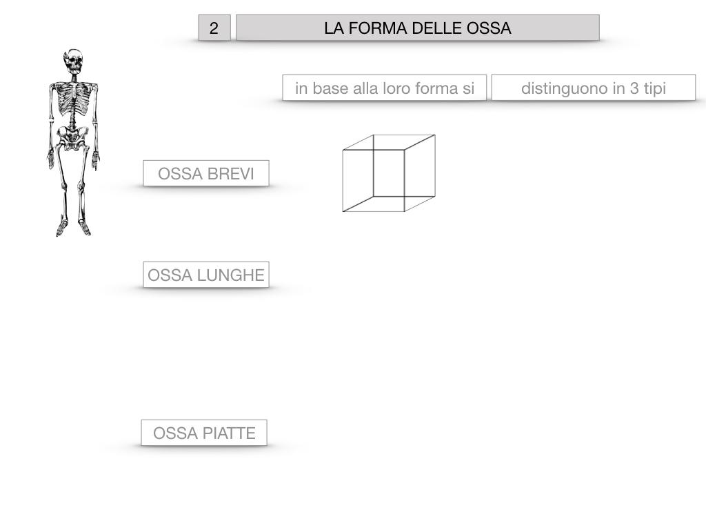 5. SCIENZE_COMPOSIZIONE E FORMA DELLE OSSA_SIMULAZIONE.042