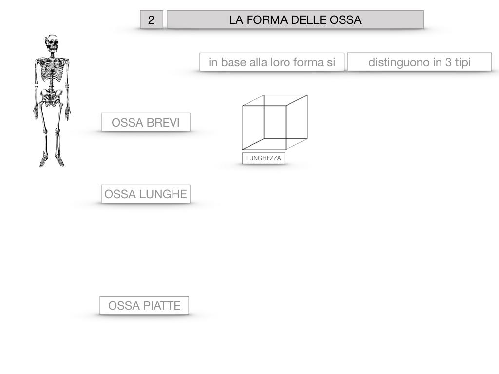5. SCIENZE_COMPOSIZIONE E FORMA DELLE OSSA_SIMULAZIONE.043