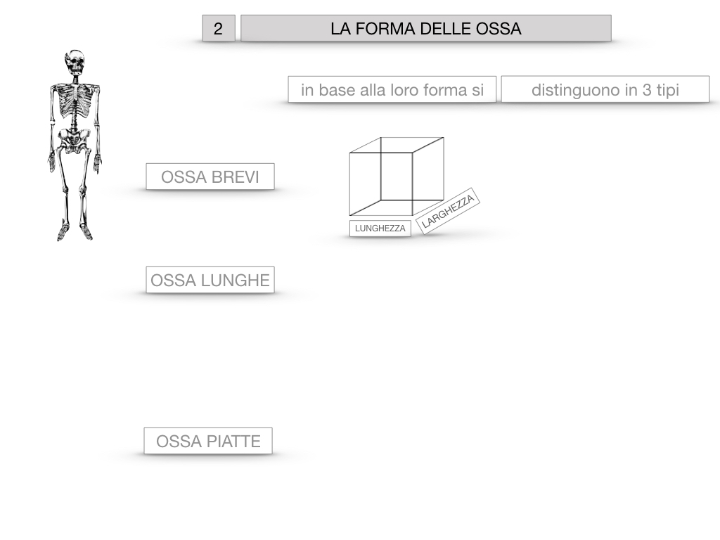 5. SCIENZE_COMPOSIZIONE E FORMA DELLE OSSA_SIMULAZIONE.044