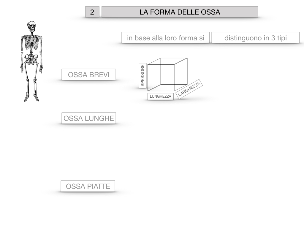5. SCIENZE_COMPOSIZIONE E FORMA DELLE OSSA_SIMULAZIONE.045