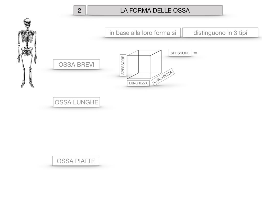 5. SCIENZE_COMPOSIZIONE E FORMA DELLE OSSA_SIMULAZIONE.046