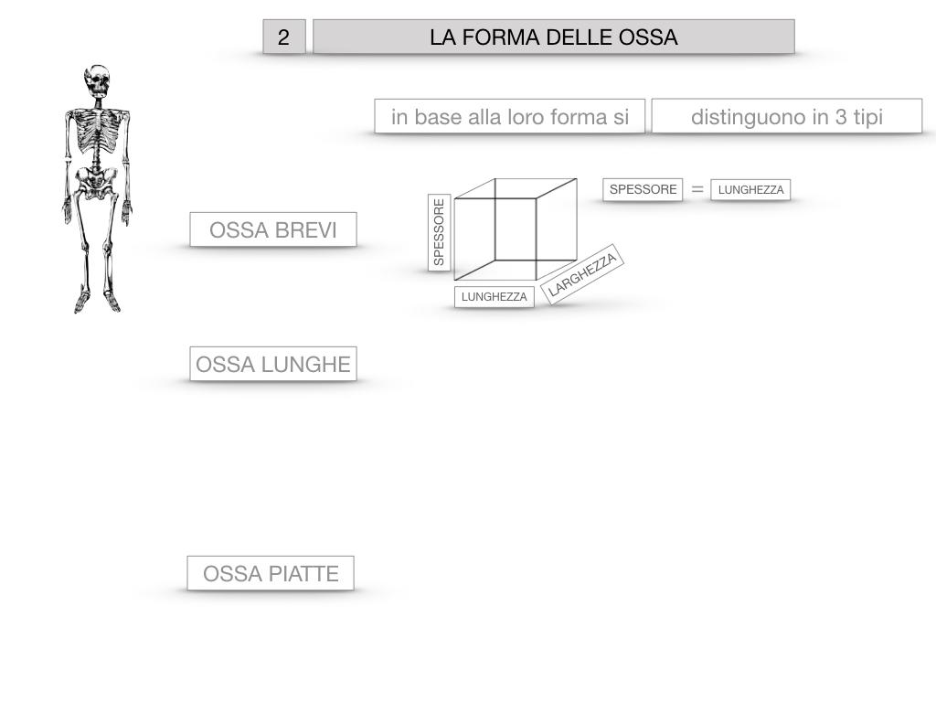 5. SCIENZE_COMPOSIZIONE E FORMA DELLE OSSA_SIMULAZIONE.047