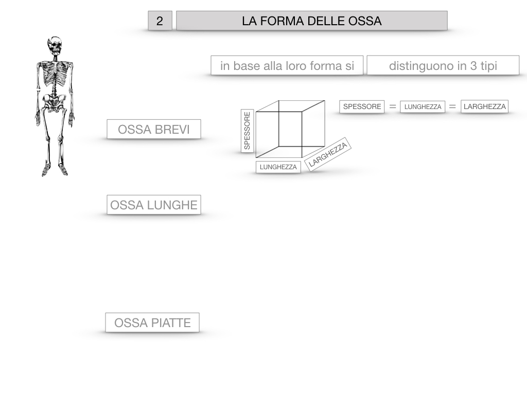 5. SCIENZE_COMPOSIZIONE E FORMA DELLE OSSA_SIMULAZIONE.048