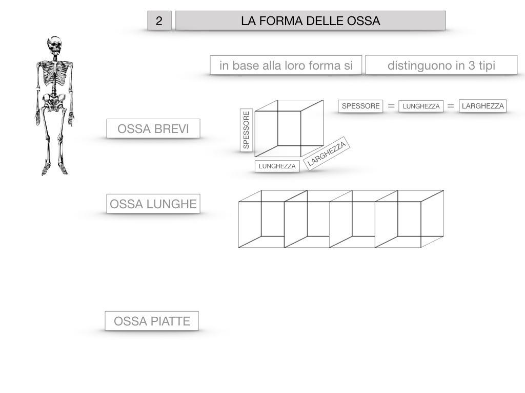 5. SCIENZE_COMPOSIZIONE E FORMA DELLE OSSA_SIMULAZIONE.049